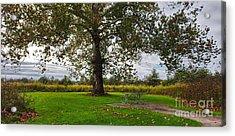Walnut Woods Tree - 1 Acrylic Print