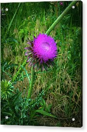 Wanna Be In Scotland Acrylic Print