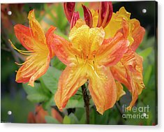 Warm Spring Colors Acrylic Print