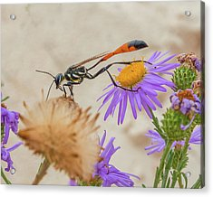 Wasp At White Sands Acrylic Print