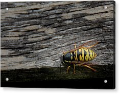 Acrylic Print featuring the photograph Wasp On Wood by Scott Lyons