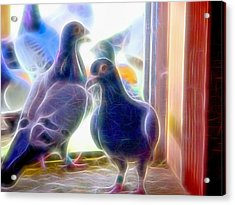 Watchful Homing Pigeons Fibers Acrylic Print