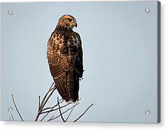 Acrylic Print featuring the photograph Watchful by Scott Bean
