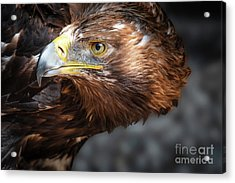 Watching Eagle Acrylic Print
