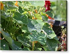 Acrylic Print featuring the photograph Water Beads After The Summer Rain by Tatiana Travelways