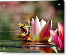 Water Lily And Frog Acrylic Print