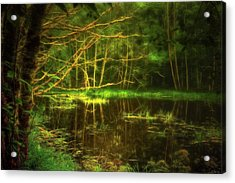 Acrylic Print featuring the photograph Water Nymph Habitat by Dee Browning