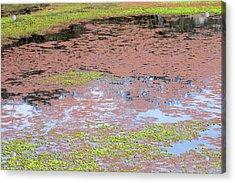 Water Reflection Svrp_1108_18 Acrylic Print