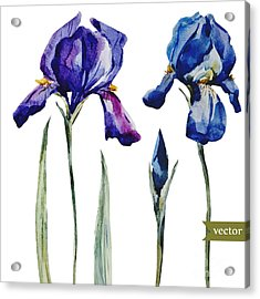 Watercolor Vector Drawing Flowers Blue Acrylic Print