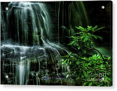 Waterfall And Rhododendron, Light And Shadow Acrylic Print