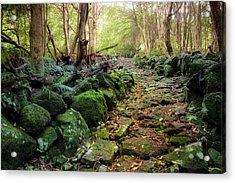 Waterfall Path Acrylic Print