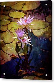 Waterlily Bouquet 2922 Idp_6 Acrylic Print