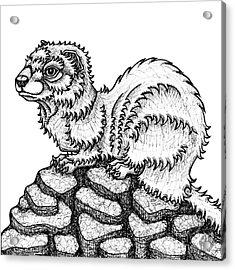 Weasel Acrylic Print