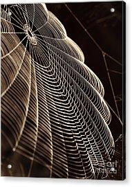 Web In Dew Drops On Dark Background Acrylic Print