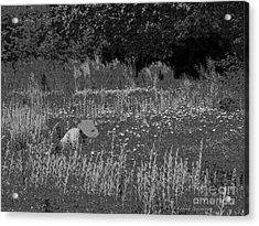 Weeding The Garden Acrylic Print