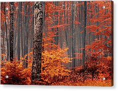 Welcome To Orange Forest Acrylic Print