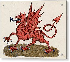 Welsh Dragon Acrylic Print by Hulton Archive