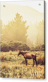Western Ranch Horse Acrylic Print
