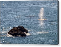 Acrylic Print featuring the photograph Whale Watching Yaquina Head Oregonn by Rospotte Photography
