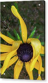 Acrylic Print featuring the photograph When Nature Gives The Finger by Dale Kincaid