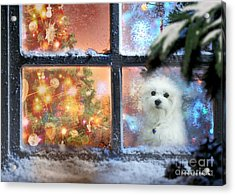 Where Is Santa ? Acrylic Print