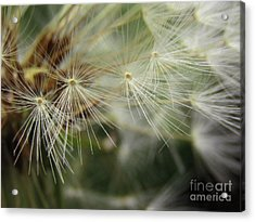 Whisper The Wishes 3 Acrylic Print