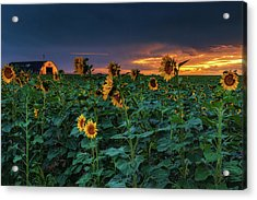 Acrylic Print featuring the photograph Whispers Of Summer by John De Bord