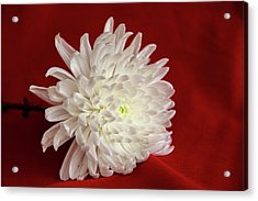 White Flower On Red-1 Acrylic Print