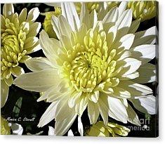 White Flowers W8 Acrylic Print
