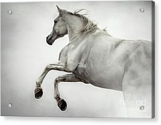 Acrylic Print featuring the photograph White Horse Rearing Up by Dimitar Hristov