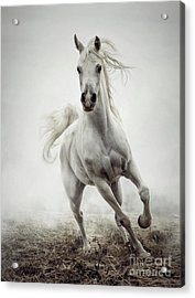 Acrylic Print featuring the photograph White Horse Running In Winter Mist by Dimitar Hristov