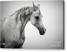 Acrylic Print featuring the photograph White Horse Winter Mist Portrait by Dimitar Hristov
