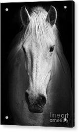 White Horses Black And White Art Acrylic Print