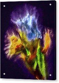 White Lily Bud #i0 Acrylic Print