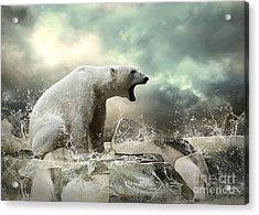 White Polar Bear Hunter On The Ice In Acrylic Print