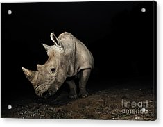 White Rhinoceros Acrylic Print by Signature Message