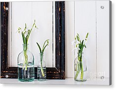 White Spring Flowers Snowdrops In Acrylic Print