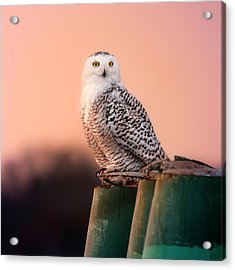 Who Are You Looking At? Acrylic Print