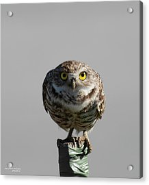 Whooo Are You Acrylic Print
