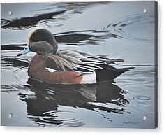 Acrylic Print featuring the painting Wigeon Drake by Peter Mathios