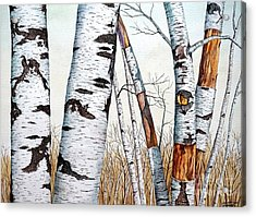 Wild Birch Trees In The Forest In Watercolor Acrylic Print