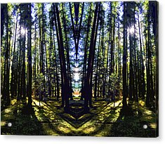 Wild Forest #1 Acrylic Print