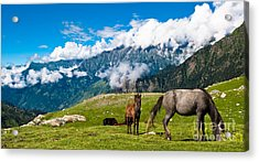 Wild Horses Pasturing On Mountain Acrylic Print