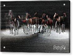 Wild Horses Under Spotlight Acrylic Print