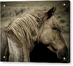 Wild Mustangs Of New Mexico 13  Acrylic Print