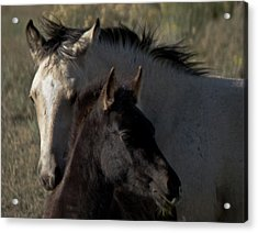 Wild Mustangs Of New Mexico 4 Acrylic Print