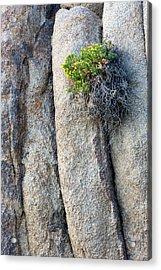 Wildflowers And Granite Acrylic Print