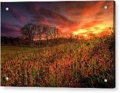 Wildflowers And Wildfire Sky Acrylic Print
