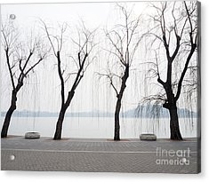 Willow Trees On The Lakeside In Beihai Acrylic Print