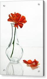 Acrylic Print featuring the photograph Wilted Gazania Red Flower On A Glass Vase.  by Michalakis Ppalis